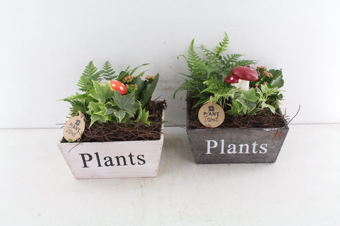 <h4>Arr. Pl Hout 4kant Plants - Rood/or</h4>