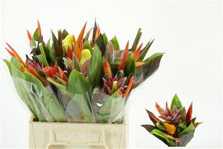 <h4>Bouquet Af</h4>