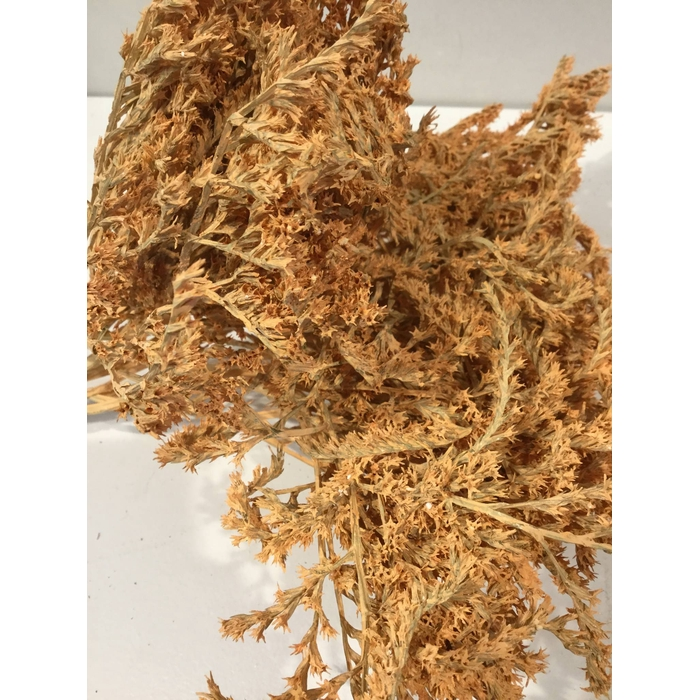 <h4>DRIED FLOWERS - STATICE TATARICA 100gr CORAL MISTY</h4>