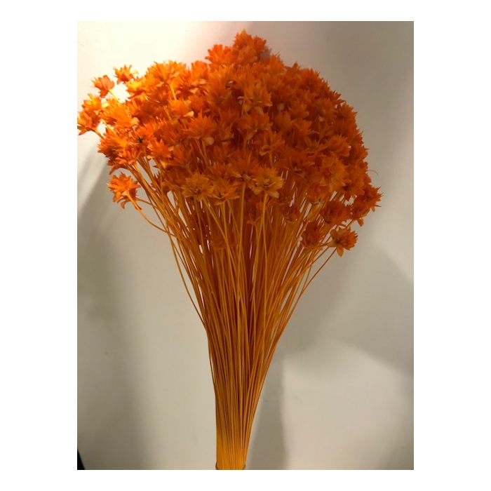 <h4>Hill flower oranje 45cm 100gr</h4>