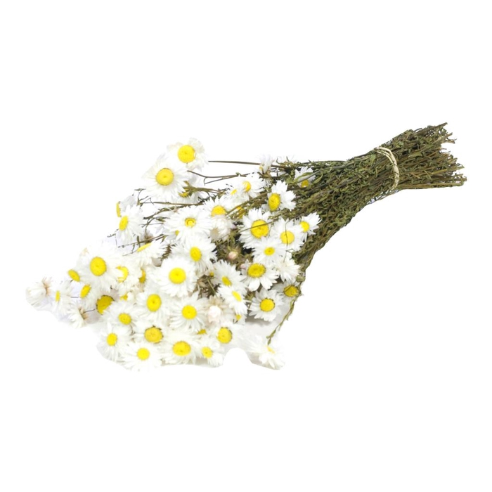 <h4>Acroclinium White Nat. Craft</h4>