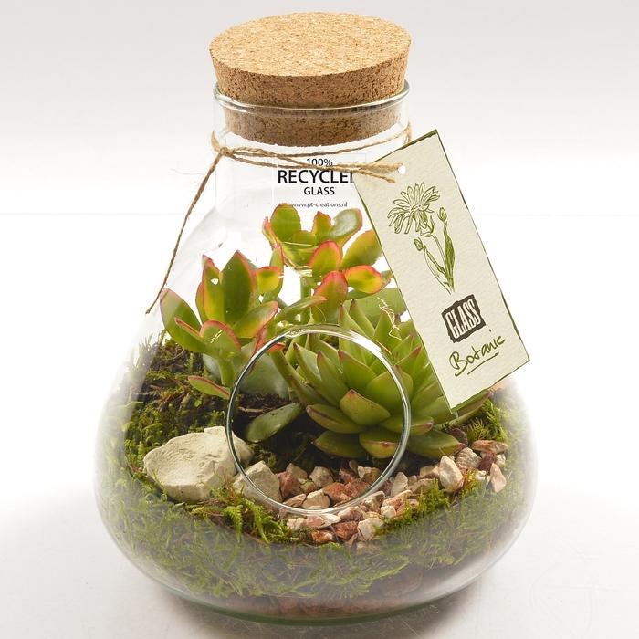 <h4>Planten  ..in schaal H%</h4>