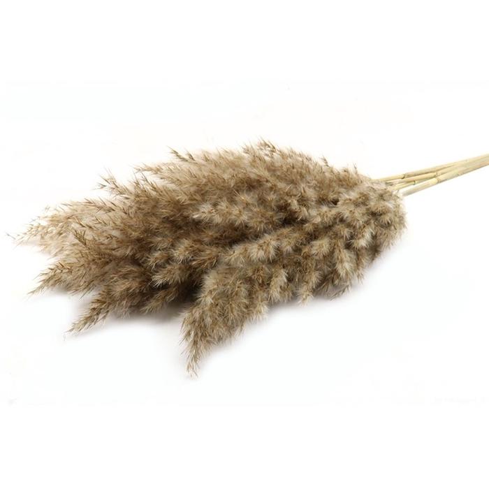 <h4>Promo Pampas wooly 100cm x5</h4>