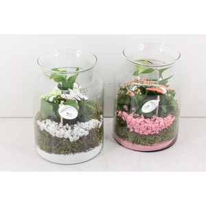 arr. PL - Glas bose hoog - roze/wit