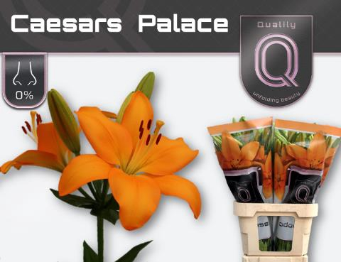 <h4>Li La Caesars Palace</h4>