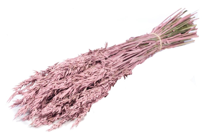 <h4>Haver/Avena pink mist craft</h4>