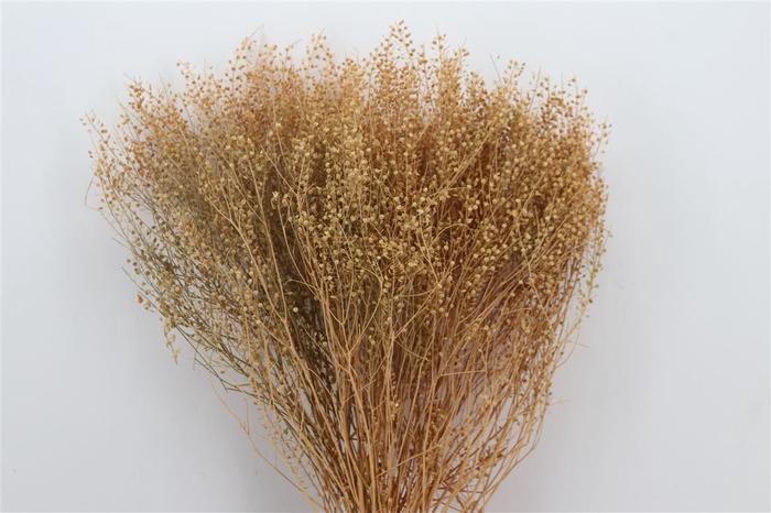 <h4>Dried Lypidium Natural 100gr Pbs</h4>