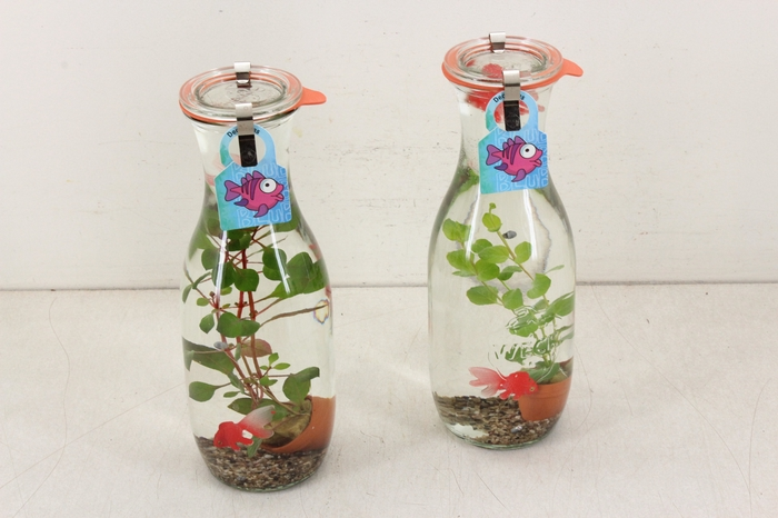 <h4>arr. VV - WW Glas bottle L</h4>