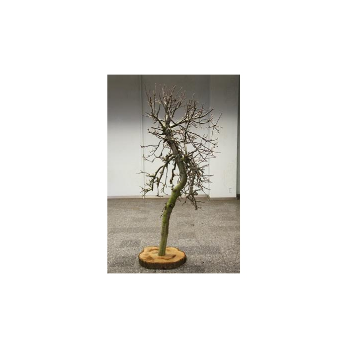 <h4>Apple Tree On Slice L</h4>