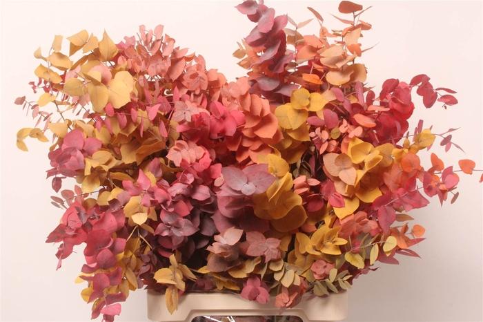 <h4>Eucalyptus Stuartiana Kort (P. Bos)</h4>