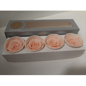 Super Rose Porcelain pink (4)