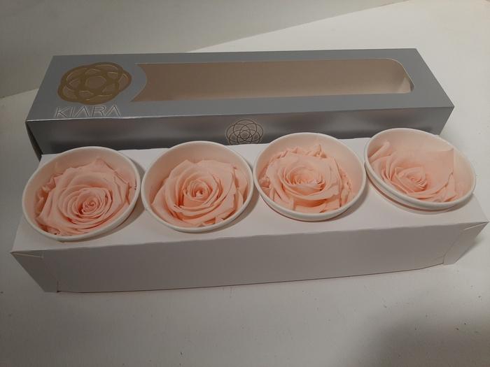 <h4>Super Rose Porcelain pink (4)</h4>