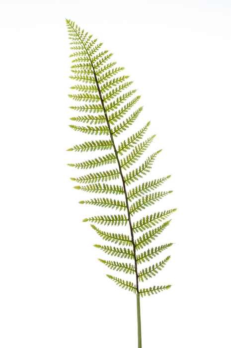 <h4>Silk Fern leather spray 100cm</h4>