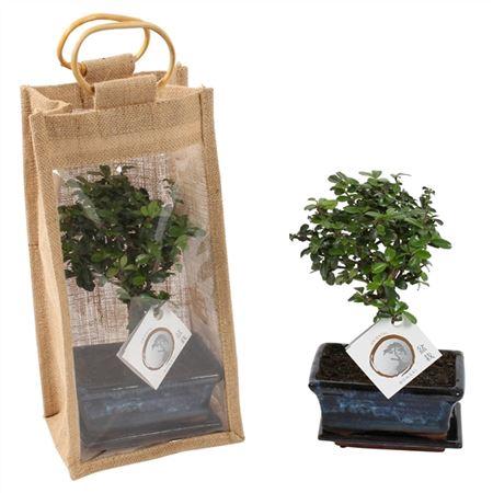 <h4>Bonsai A1151934 Gemengd Keramiek + Jute Giftbag</h4>