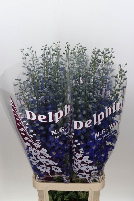 <h4>Delphinium El Dewi Blue Star</h4>