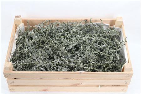 <h4>Wax Asparagus Antique Olive P Box</h4>