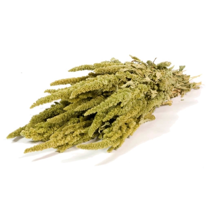 <h4>Amaranthus green natural</h4>