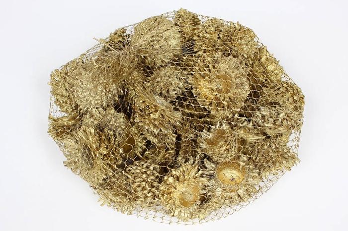 <h4>Acorn Cones 500gr in net gold</h4>