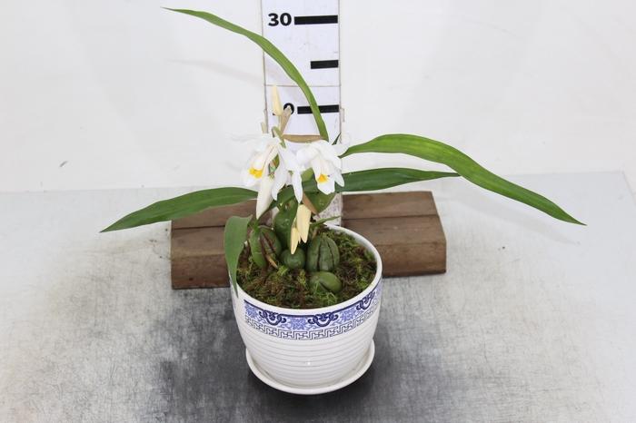 <h4>COQ. PLANTAS ORN. T3</h4>