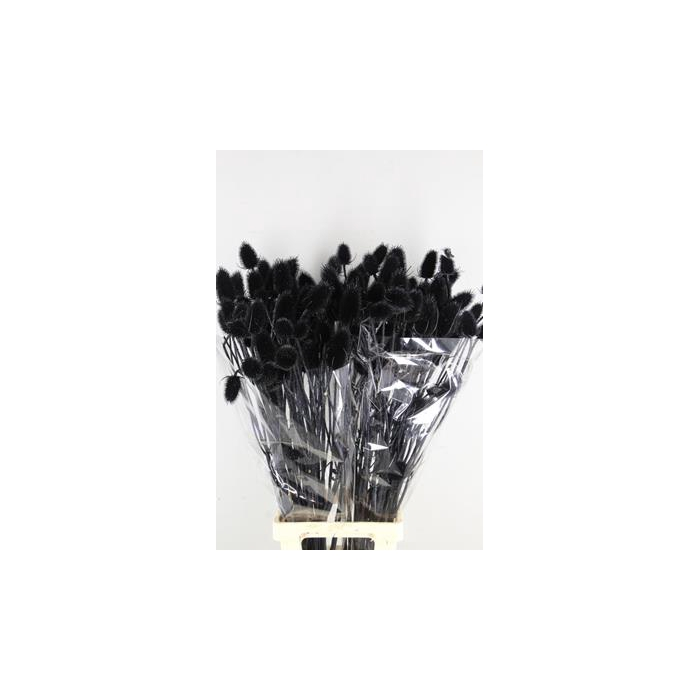 <h4>Dipsacus Paint Black+glitter</h4>
