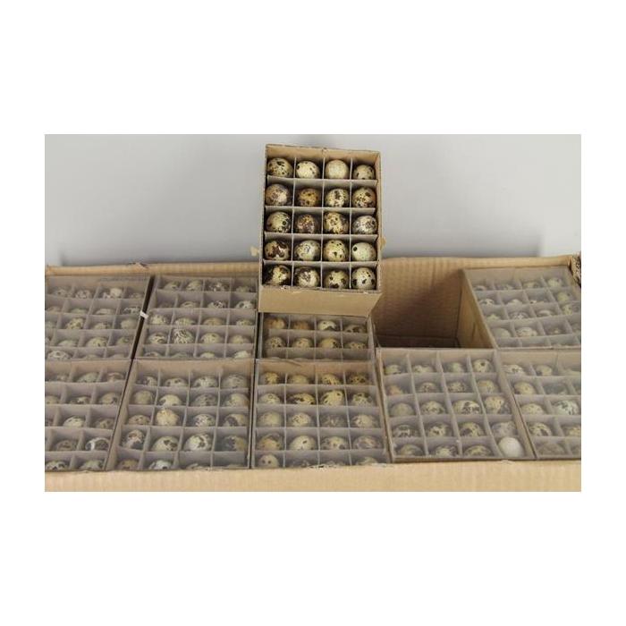 <h4>Egg Quail Box(60pcs)/outerbox</h4>
