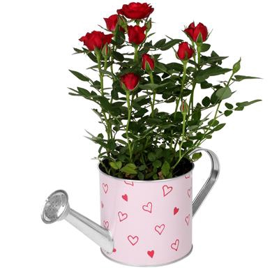 <h4>Arrosoir Love story zinc D12,5xH11,3cm rouge/rose</h4>