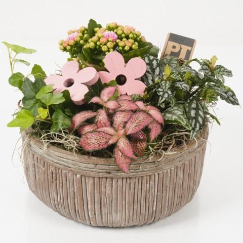 <h4>PTIB4621 Arrangementen planten in schaal</h4>