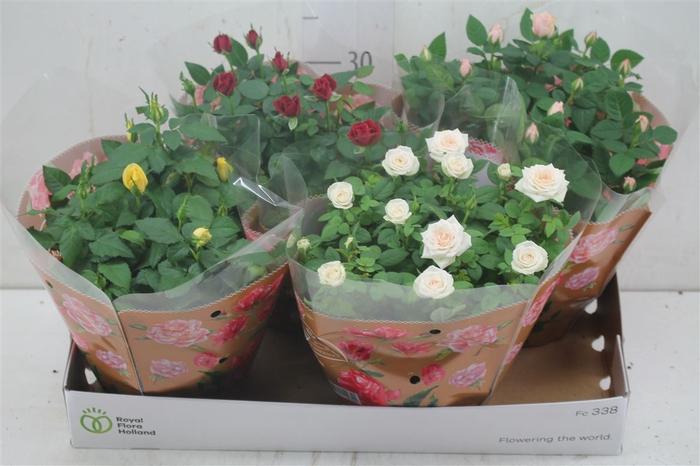 <h4>Rosa Favourite Gemengd Schaal</h4>