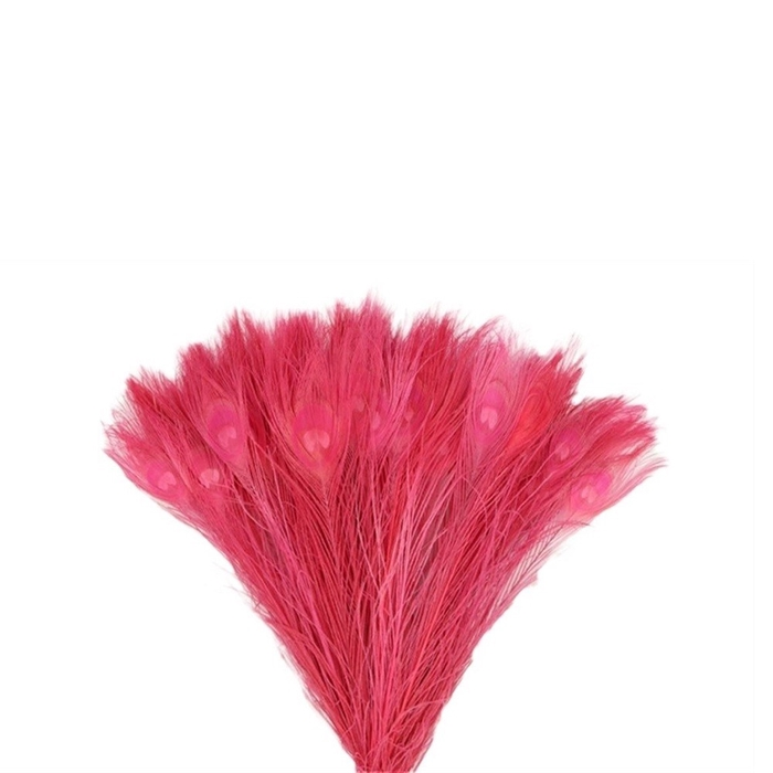 <h4>Promo Peacock feathers 45cm x10</h4>
