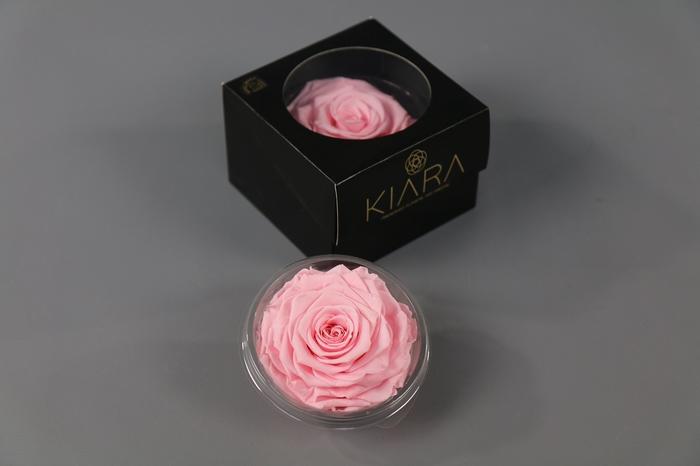 <h4>Rosa Preserved Bridal Pink Solitarie</h4>