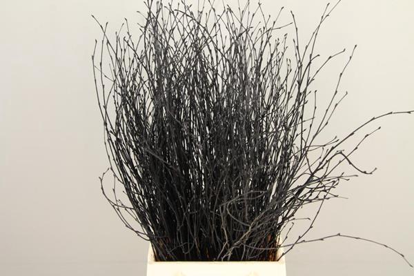 <h4>Betula Bs Paint Black Fst</h4>