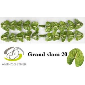 ANTH A GRAND SLAM