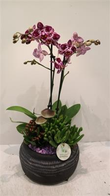 <h4>PH002 Bari Small Purple</h4>