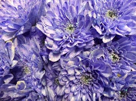 <h4>Chr T Baltica Lilac + Glit</h4>
