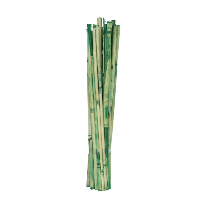 <h4>Dried articles Canna 40cm x25</h4>