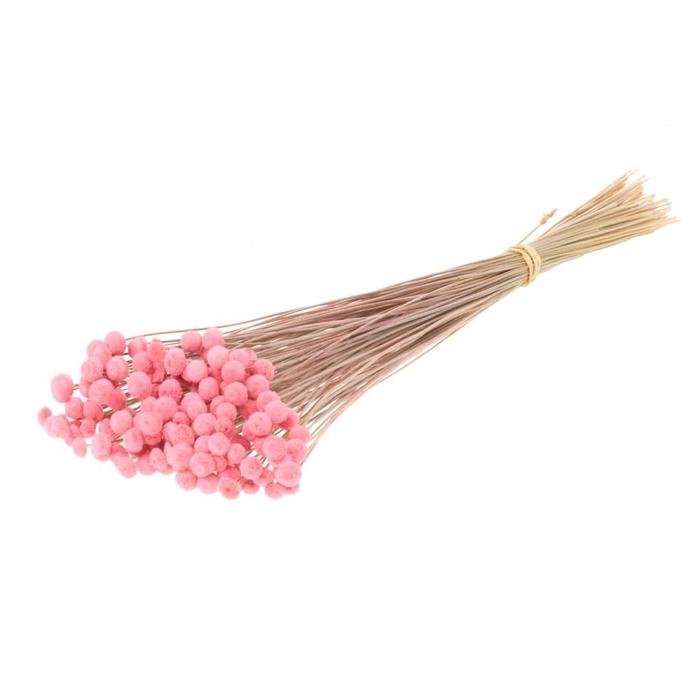 <h4>DRIED FLOWERS - BOTAO PINK</h4>