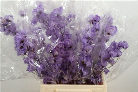 <h4>DRIED BOUGAINVILLEA D.LILA - PAARS</h4>