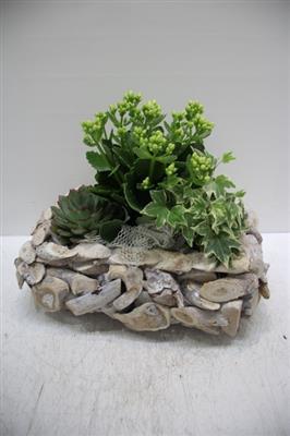 <h4>2621 Driftwood RH Plants</h4>