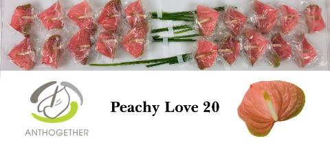 <h4>ANTH A  PEACHY LOVE 20.</h4>