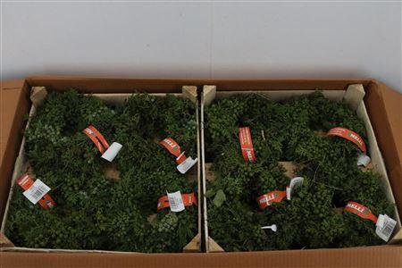 <h4>Wr Krans Juniperus Naturel 20cm</h4>