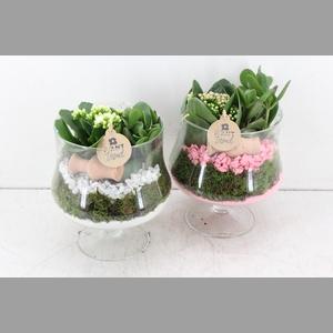 arr. PL - Glas op voet x4 - roze/wit