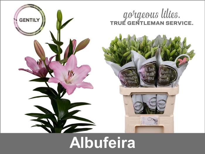 <h4>LI LA ALBUFEIRA</h4>