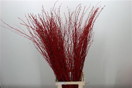 <h4>Dec Berk Red</h4>