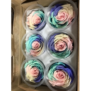 Rose XL Rainbow pin-04