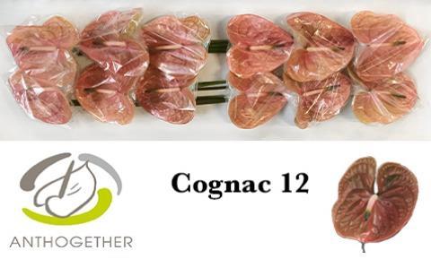 <h4>ANTH A COGNAC</h4>