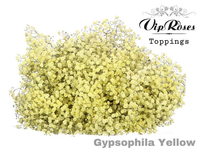 <h4>GYPS PA YELLOW</h4>