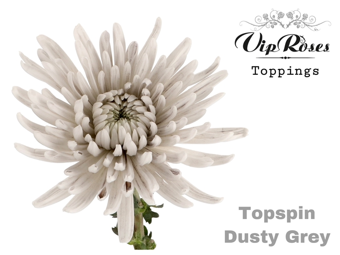 <h4>CHR G TOPSPIN DUSTY GREY</h4>