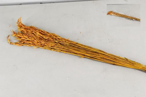 <h4>Df Avena 75cm/80g Yellow</h4>
