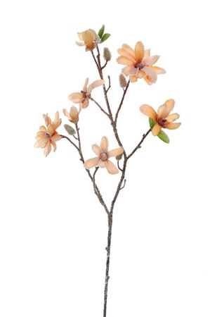 <h4>Flower Magnolia1 orange/brown</h4>