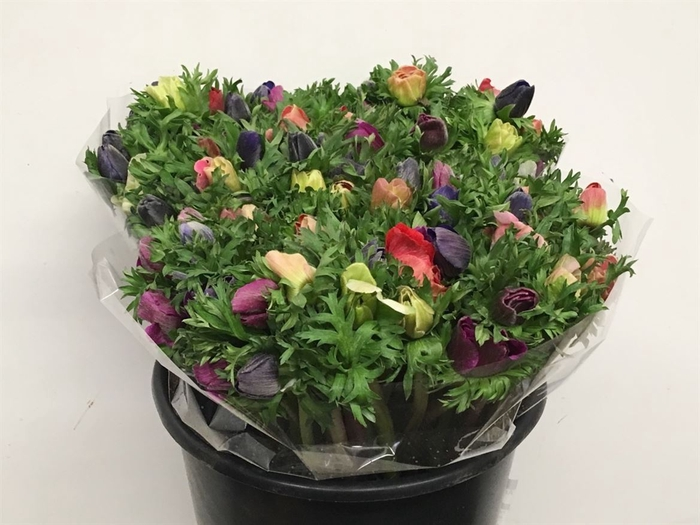 <h4>Anemone   ...mix in bos</h4>